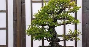Feng Shui Büro : feng shui im b ro arbeitsplatz im fluss ~ A.2002-acura-tl-radio.info Haus und Dekorationen