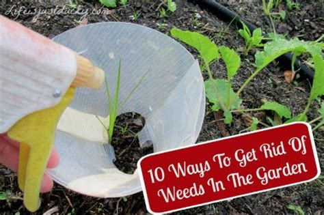 Keep Weeds Out Of Garden by 10 Ways To Keep Weeds Out Of The Garden