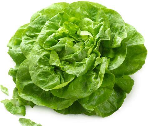 cuisine definition salade verte épicée la cuisine sans lactose