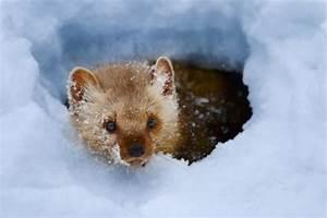 Tiere Vertreiben Ultraschall : marder im garten das beste aus wohndesign und m bel ~ Articles-book.com Haus und Dekorationen