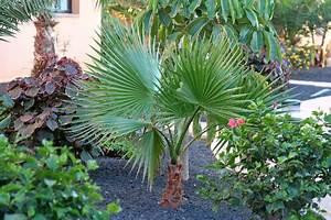 Palmen Für Den Garten : exotische pflanzen im eigenen garten freshouse ~ Sanjose-hotels-ca.com Haus und Dekorationen
