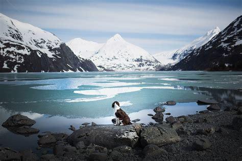 iceland norway alaska       dogs