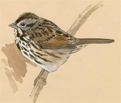 Birds Drawing Step Bird Draw Drawings Tutorial
