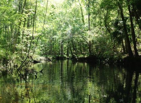 Hammock Florida by Gulf Hammock 2019 Best Of Gulf Hammock Fl Tourism