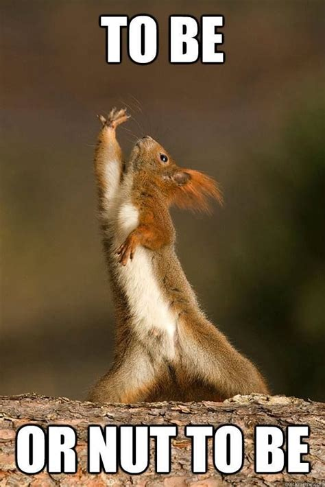 Squirrel Nuts Meme - 55 best nut puns images on pinterest charades clean puns and funny puns