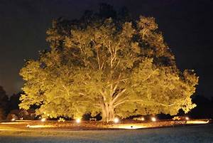 landscape lighting outdoor contracting With outdoor lights for oak trees