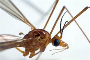 Hausmittel Gegen Mückenstiche : hausmittel gegen m ckenstiche zur vorbeugung ~ Watch28wear.com Haus und Dekorationen