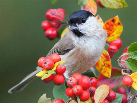 the best plants to attract birds to your garden saga