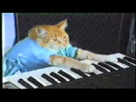 Cat Playing Piano Meme - keyboard cat www pixshark com images galleries with a bite