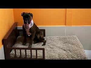 Hotel Pour Chien : duba un h tel pour chien 125 euros la nuit youtube ~ Nature-et-papiers.com Idées de Décoration