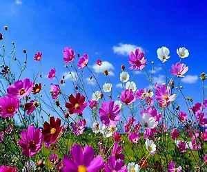 sognare fiori significato sognare fiori significato e simbolismo dei fiori nei sogni