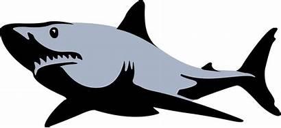 Shark Illustration Clip