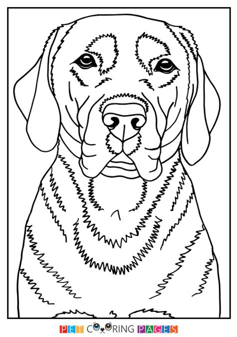 labrador coloring page  getcoloringscom  printable colorings pages  print  color