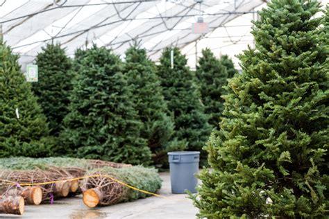 christmas tree farms upstate ny hacks to keep your real christmas tree fresh all 5890