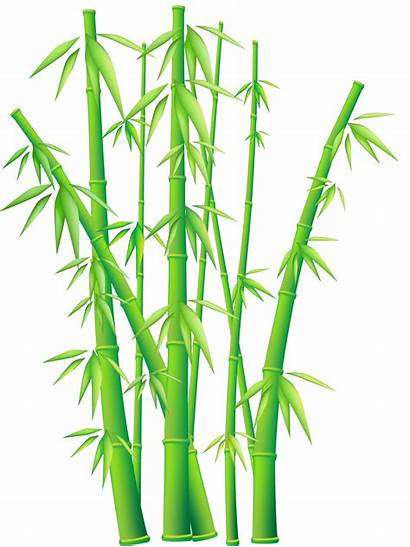Bamboo Border Clip Cliparts Projects Clipart Attribution