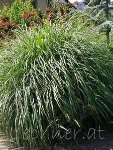 Gräser Zurückschneiden Frühjahr : pflanzen ~ Lizthompson.info Haus und Dekorationen