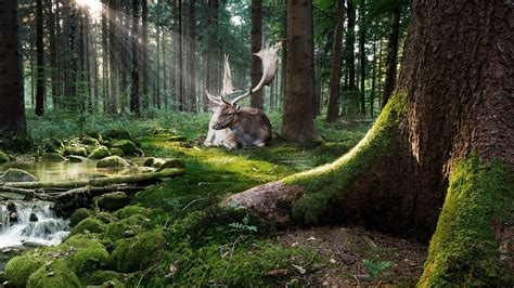 Woodland Animal Wallpaper - woodland animals wallpaper 32 images