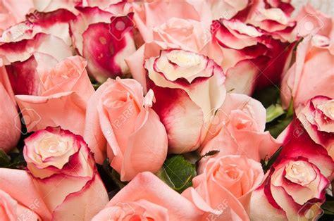 gros bouquet de gros bouquet de roses fleuriste bulldo