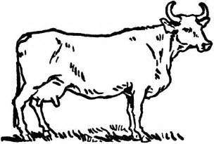 Beef Cow Clip Art Black and White