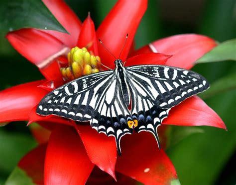 fondos de pantalla de mariposas wallpapers hd mariposas
