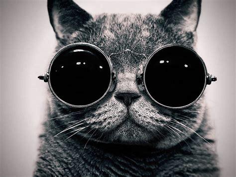 cute cat hd wallpapers designmaz