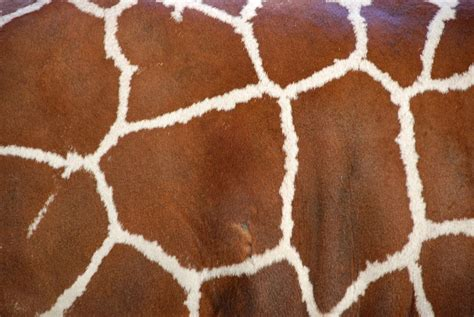 Animal Print Wallpaper Giraffe - giraffe print wallpaper