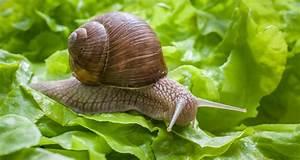 Schnecken Im Garten : schnecken im garten bek mpfen die besten tipps chip ~ Frokenaadalensverden.com Haus und Dekorationen
