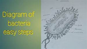 How To Draw Diagram Of Bacteria Easy Steps