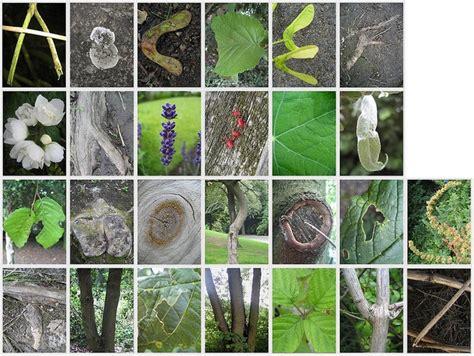 101 Best Images About Letters In De Natuur/nature Alphabet