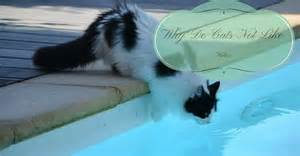 why do cats water why do cats not like water upgrade your cat