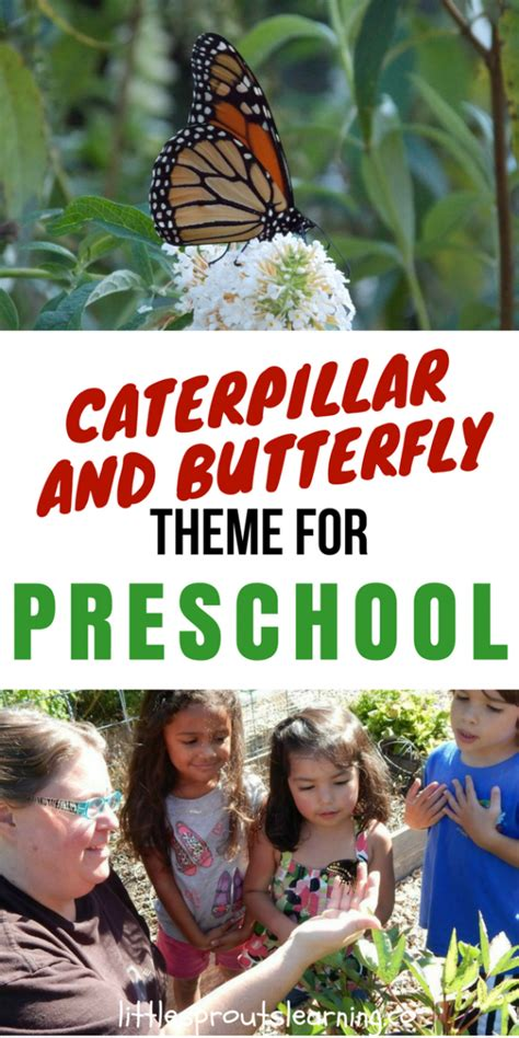 caterpillar and butterfly theme for preschool 697 | Caterpillar and Butterfly Theme for Preschool