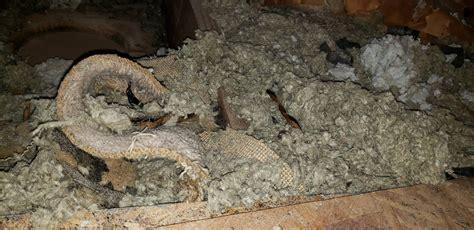 insulation  home   asbestos   attic