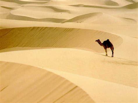 imagenes de animales  viven en el desierto