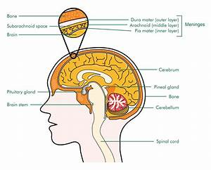 Pineal-region Tumours - Cancer Information