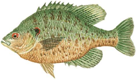 types  fish pond stocking