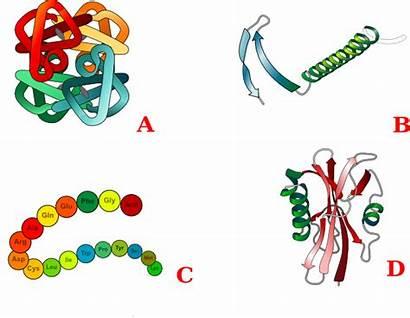 Protein Strukture Clip Clipart Vector Domain Clker