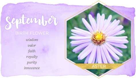 september birth color september birth flower aster ftd