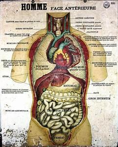 Anatomy Poster French  Body