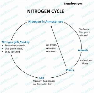 Nitrogen Cycle - Diagram With Steps Explained