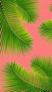 palm leaf on Tumblr
