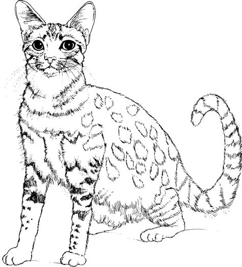 cute cat animal coloring pages  kids  print color