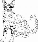 Cat Cute Coloring Animals Pages Print Animal sketch template