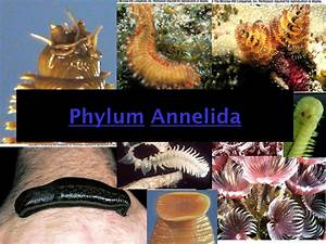 collage   annelida Phylum   Pinterest   Collage