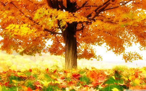 Animated Autumn Wallpaper - autumn wallpaper widescreen