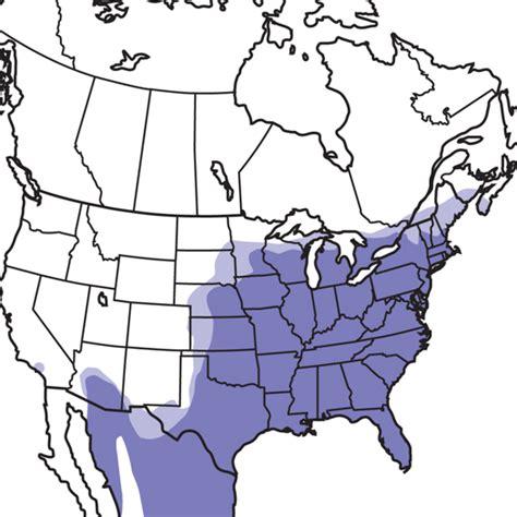 northern cardinal audubon field guide
