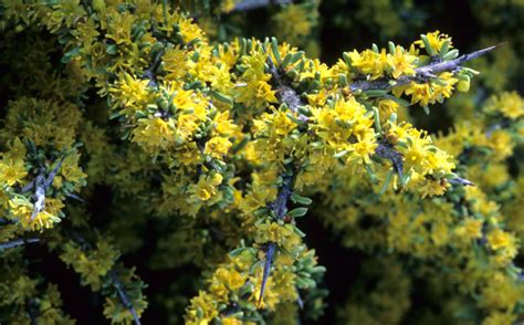 Improve Landscaping With Texas Native Plants  City Of