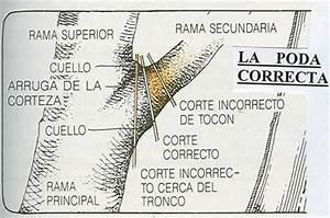 PODA ARBOLES COMPLETO ~ INFORMACIONES AGRONOMICAS Huerto casero Pinterest Discover more