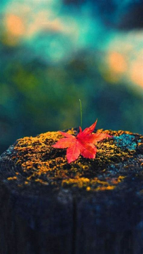 Autumn Lock Screen Wallpapers by Maple Leaf Cellphone Wallpaper Lock Screen Fall Autumn