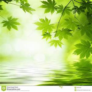 Green Leaves Reflecting In The Water Stock Image - Image ...