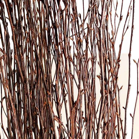 Decorative Branches  Natural Birch Branches. Nautical Bedroom Decor. Artificial Flower Decoration For Home. Entertainment Center Rooms To Go. Wedding Reception Decoration Rentals. Craft Room Storage Solutions. Rooms To Go Rugs. Decorative Wood Shelves. Decorating A Large Living Room Wall Ideas